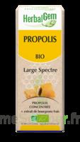 Herbalgem Propolis Large Spectre Solution Buvable Bio Fl Cpte-gttes/15ml à Valenciennes